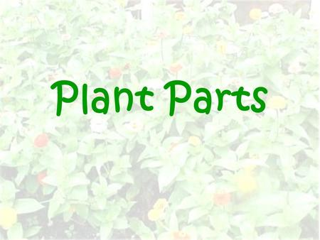 Plant Parts. Public Parts flower leaf stem What important part cannot be seen?
