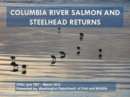 COLUMBIA RIVER SALMON AND STEELHEAD RETURNS FPAC and TMT – March 2013 Presented by: Washington Department of Fish and Wildlife.