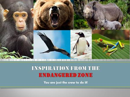 You are just the crew to do it!. First… What animals will we try to save? We must research to find out about different types of endangered animals. Second…