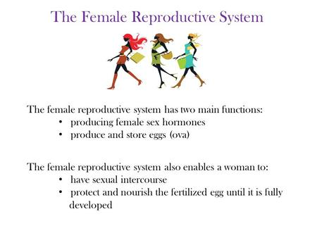 The female reproductive system also enables a woman to: have sexual intercourse protect and nourish the fertilized egg until it is fully developed The.
