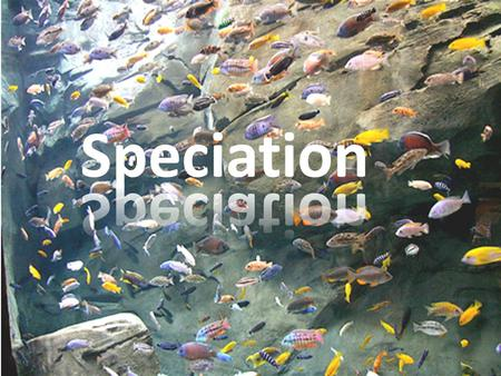 Speciation. Species: A group of organisms capable of interbreeding = they are isolated reproductively from other species 1)Live together but cannot interbreed.