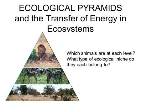 ECOLOGICAL PYRAMIDS and the Transfer of Energy in Ecosystems Which animals are at each level? What type of ecological niche do they each belong to?
