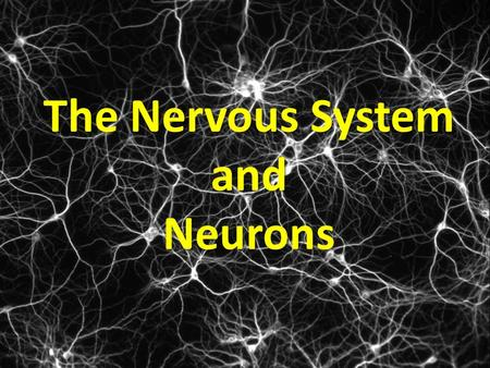 The Nervous System and Neurons Is this even possible? Why or why not?