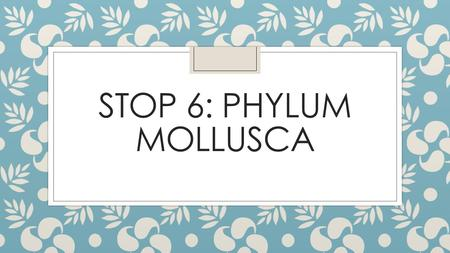 Stop 6: Phylum mollusca.