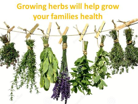 Growing herbs will help grow your families health.