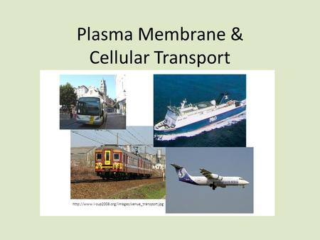 Plasma Membrane & Cellular Transport