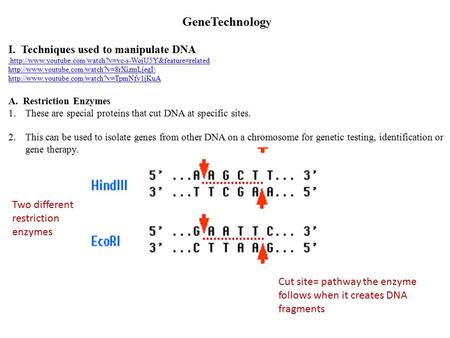 GeneTechnolog y I. Techniques used to manipulate DNA