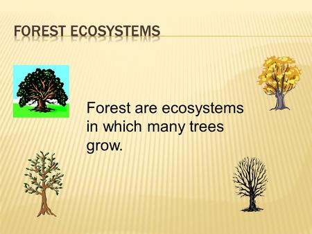 Forest are ecosystems in which many trees grow..