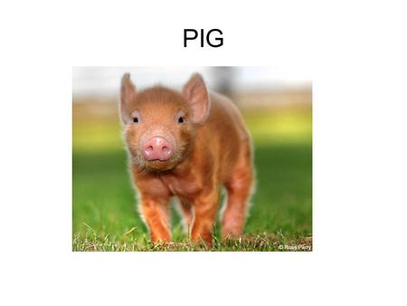 PIG. describe how hydrogen bonding occurs between water molecules, and relate this, and other properties of water, to the roles of water in living organisms.