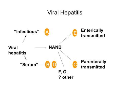 "Viral Hepatitis A ""Infectious"" ""Serum"" Viral hepatitis Enterically transmitted Parenterally transmitted F, G, ? other E NANB BD C."