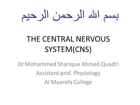 THE CENTRAL NERVOUS SYSTEM(CNS)