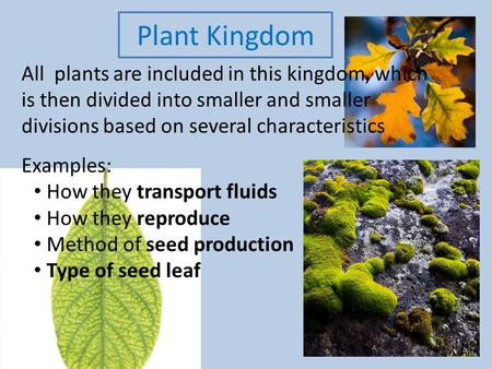 Plant Kingdom All plants are included in this kingdom, which is then divided into smaller and smaller divisions based on several characteristics Examples: