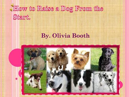 By. Olivia Booth T ABLE OF C ONTENTS Page 3- Choosing the right dog for you Question List. Page 4- Choosing the right dog for you Page 5- Choosing the.