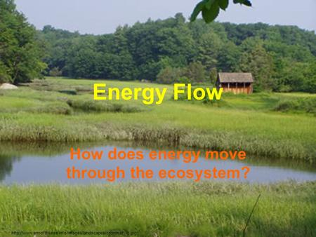 Energy Flow How does energy move through the ecosystem?