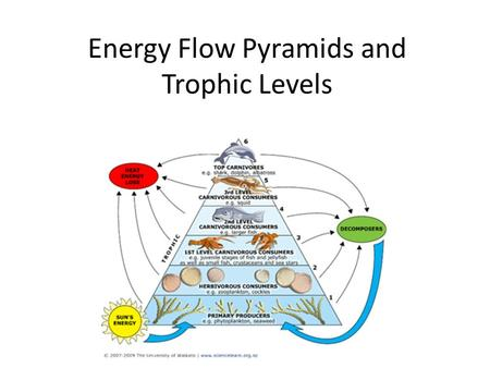 52 Energy Transfer Between Trophic Levels Ppt Download