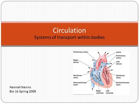 Systems of transport within bodies Circulation Hannah Nevins Bio 1b Spring 2009.