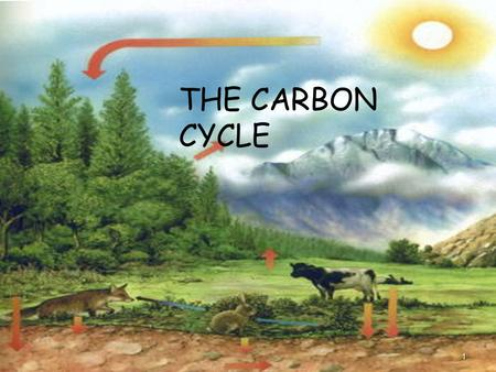 THE CARBON CYCLE 1. 2 What is the Carbon Cycle? The Carbon Cycle is a complex series of processes through which all of the carbon atoms in existence.