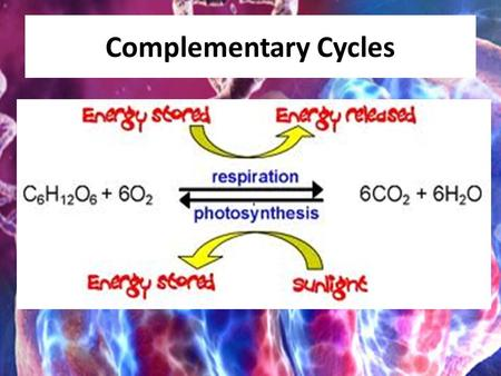 Complementary Cycles. Food Stores Chemical Energy Chemical Energy is a form of potential energy due to the arrangement of the atoms within the molecules.