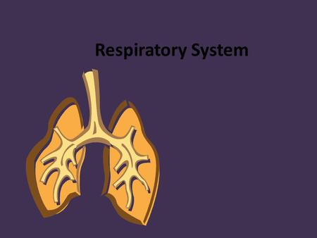 Respiratory System. Functions of the Respiratory System The main function is respiration – The exchange of gasses between the body and the environment.