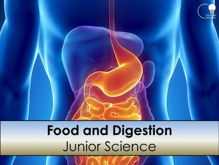Food and Digestion Junior Science.