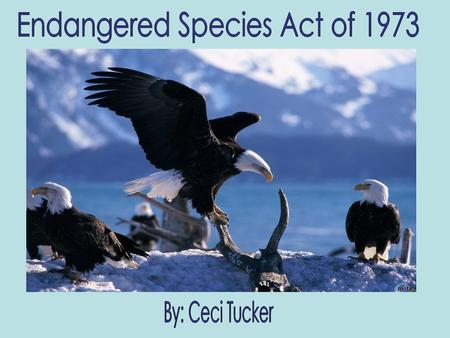 The Endangered Species Act of 1973 was created to provide conservation of endangered and threatened species of fish, wildlife, and plants. The Act came.