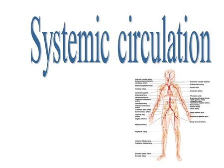 Systemic circulation.
