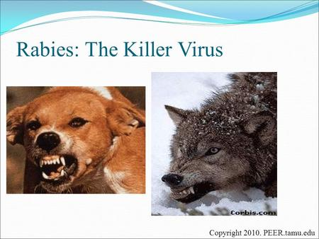 Rabies: The Killer Virus
