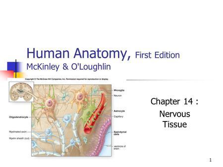 human anatomy mckinley 3rd edition pdf
