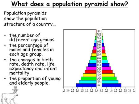 What does a population pyramid show? Population pyramids show the population structure of a country… the number of different age groups. the percentage.