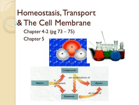 Homeostasis, Transport & The Cell Membrane Chapter 4-2 (pg 73 – 75) Chapter 5.