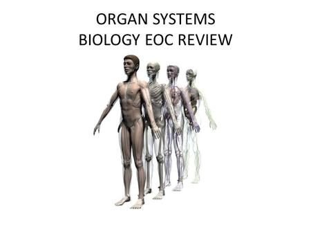 ORGAN SYSTEMS BIOLOGY EOC REVIEW