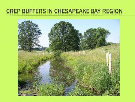  Riparian Buffers  24,884 Acres  3,859 contracts  6.5 acre average per contract.