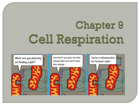 Chapter 9 Cell Respiration