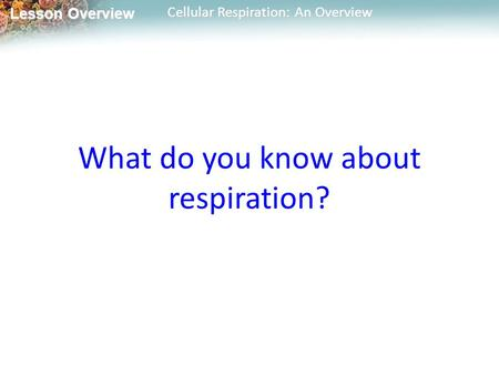 Lesson Overview Lesson Overview Cellular Respiration: An Overview What do you know about respiration?