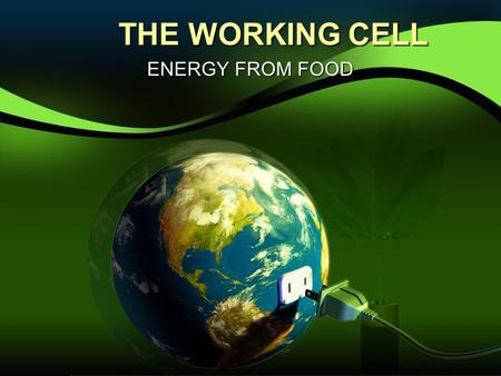 THE WORKING CELL ENERGY FROM FOOD.