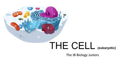THE CELL (eukaryotic) The IB Biology Juniors. Nucleus <strong>Definition</strong>: Region of the cell containing <strong>chromosomes</strong>, surrounded by a double membrane, in which.
