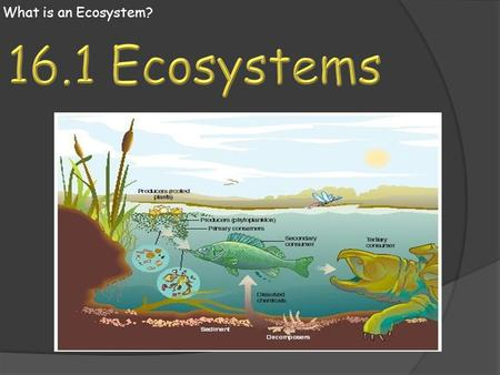 What is an Ecosystem? 16.1 Ecosystems.