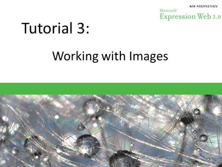 Tutorial 3: Working with Images. Objectives Session 3.1 – Identify the differences among image file types – Evaluate the purpose of alternative text –