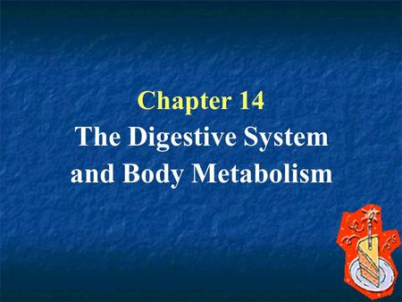 Chapter 14 The Digestive System and Body Metabolism