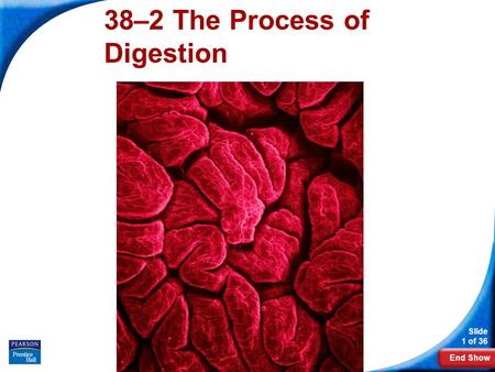 38–2 The Process of Digestion