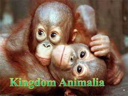 Introduction to animals Introduction to Animals Traits WHAT IS AN ANIMAL ? ? ?