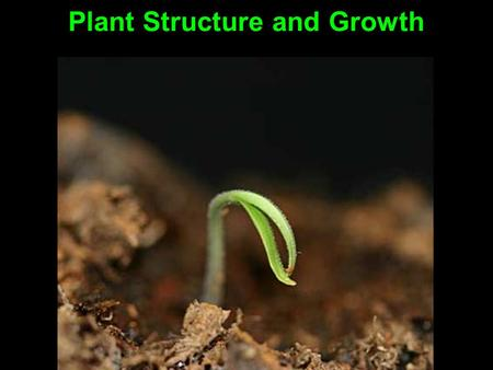 Plant Structure and Growth. Three main organs: Roots Stems Leaves.