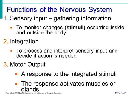 Functions of the Nervous System Slide 7.1a Copyright © 2003 Pearson Education, Inc. publishing as Benjamin Cummings 1.Sensory input – gathering information.