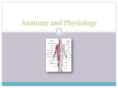 Anatomy <strong>and</strong> Physiology. Skeletal System Introduction to the Skeletal System Humans are vertebrates, animals having a vertabral column or backbone. They.