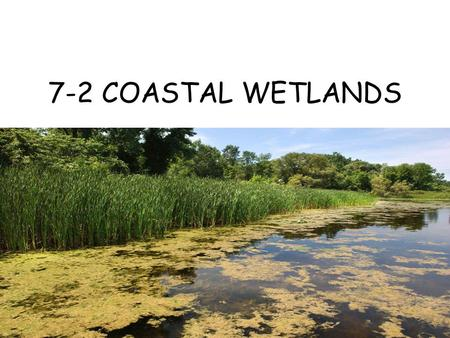 7-2 COASTAL WETLANDS.