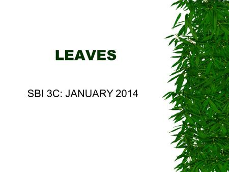 LEAVES SBI 3C: JANUARY 2014. LEAF FUNCTIONS 3 main functions: Move oxygen and carbon dioxide in and out of plant Evaporation of water to move more water.
