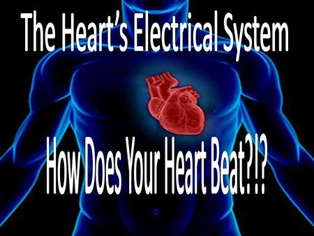 Your heart is a muscle that works continuously like a pump Each beat of your heart is set in motion by an electrical signal from within your heart muscle.
