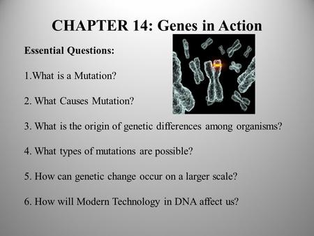 CHAPTER 14: Genes in Action