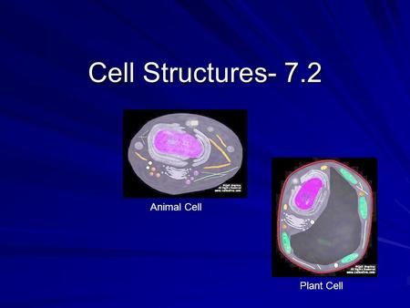 Cell Structures- 7.2 Animal Cell Plant Cell.