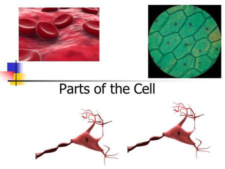 Parts of the Cell.